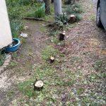 間垣の伐採